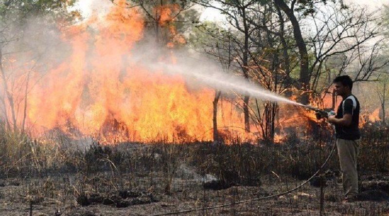 अगर नहीं बुझी जंगलों की आग, तो खत्म हो जाएगा सबकुछ