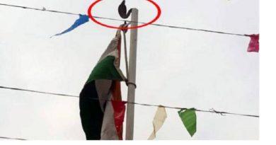 एक ही जगह दिखा स्वतंत्रता दिवस और नागपंचमी का नजारा, फहराया झंडा दिखा सांप