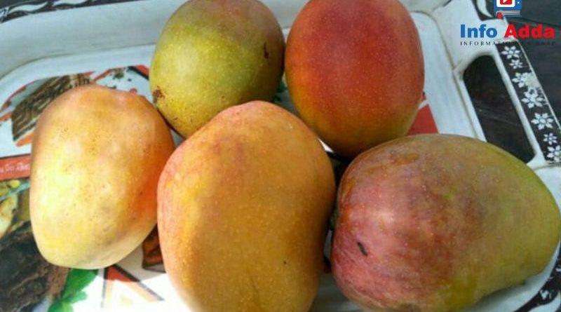 # amazing recopies of mango