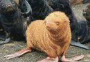 सोशल मीडिया पर वायरल हुई दुर्लभ एल्बिनो सील, देखिए कैसा दिखता है ये अनोखा जीव